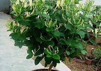 養花就養這4種,一個枝種一棵,養一盆,氣味芳香、身體更健康