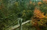 《風景圖集》:陝西漢中黎坪森林公園領略不一樣的秋景
