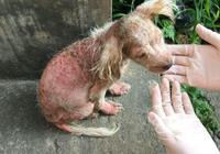 流浪狗身上毛都掉光了,小姑娘給它洗澡以後,狗狗好像在那邊哭泣