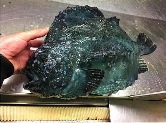 漁民深海區域捕到怪異魚種,網友感嘆:這神祕莫測的大海