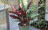 難怪老婆不養綠蘿了,客廳擺上這9種盆栽,不僅養人還滿屋子飄香