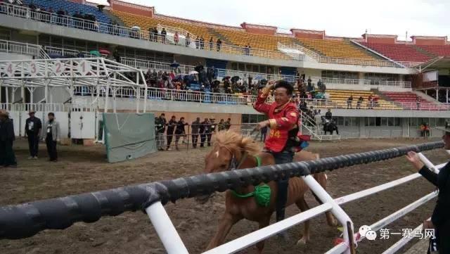 沒有馬文化的藏文化不是完整的文化
