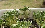 奶奶就用一個土方法,讓全家人天天吃新鮮豆芽,真是太聰明瞭