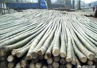 毛竹價格持續低迷,還值得種植嗎?