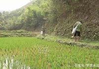 """越南人太愛吃竹鼠,挖2米深坑把它挖出來,像""""抬豬""""一樣抬回家"""