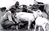 """日軍侵華時的""""醜照"""",把國旗掛在羊頭上"""