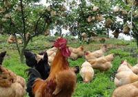 變廢為寶!農村這三類綠色農業將迎來新商機!