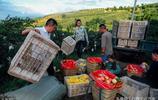 涼山36歲農家女靠種石榴致富,一年淨賺500萬,兒子嫌累不願意幹