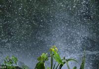雨打梨花深閉門,古詩詞中的雨,唯美得令人窒息!