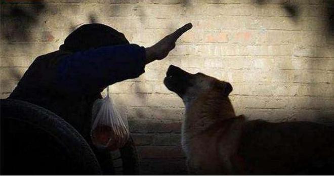 狗狗沒有什麼貧賤之分,土狗每天推殘疾老人去集市賺錢,經常吃不飽飯自己撿垃圾解決