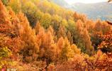 北京門頭溝黃安坨層林盡染 美不勝收令人留連忘返