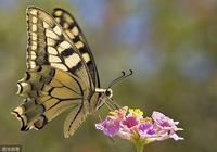 上聯:蝴蝶花上落蝴蝶