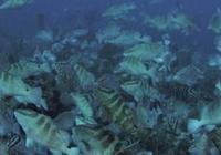 洋流作用將世界各國漁業連接成一個網絡