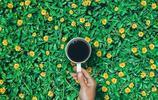 春天的顏色,精選15張獲獎的綠色照片欣賞