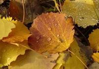 秋風起相思,秋雨助淒涼