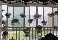 除了養綠蘿,這幾種花,也好養好活,有些開花稠密、鮮豔