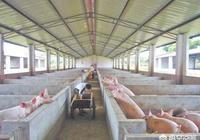 如果行情上漲,兩廣地區的生豬供應還有嗎?會不會影響我們的市場?