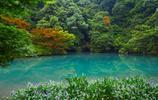 西湖是遊客遊杭州必去的景點,杭州人眼中最美風景卻在這裡