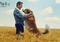"""暖心佳片《一條狗的使命2》今起內地上映 聯合出品方阿里影業獲譽""""中國最佳合夥人"""""""