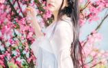 花開的海棠