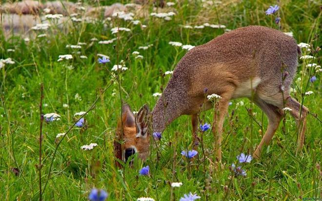 動物圖集:可愛的動物