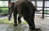 """實拍印尼最""""殘忍""""的動物園,說好的幸福呢?"""