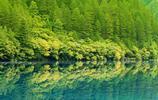 高清綠色清涼手機壁紙 為炎炎夏天帶來一絲涼意1440*2560