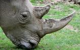 動物圖集:犀牛圖集