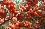 家有十畝地,就別出去打工了!種上這些高產果苗,當年結果壓滿枝
