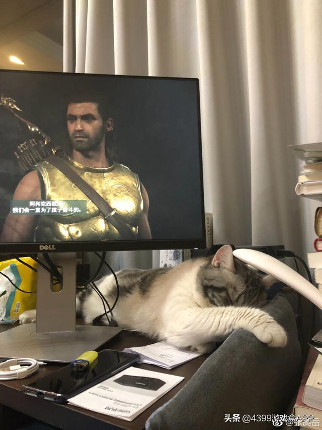 央視主持人沉迷遊戲不做鏟屎官,貓咪生氣:你給我適可而止!