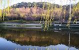 春光無限好,美景隨手撩,週末這裡有山有水有樹有花,太美了