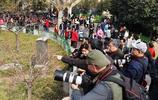 週日 鄭州人民公園賞花市民爆滿   彤陽的攝影活動如期舉行
