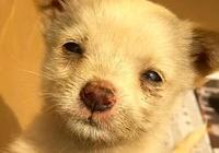 3個月前救了一隻小奶狗,3個月後再見時,讓我好感動