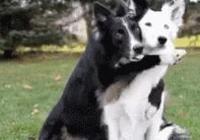 關於養狗的冷知識,這些知識點知道的人太少了!你瞭解嗎?
