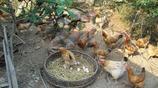 農村阿婆總有賣不沒的土雞蛋,再三追問終於說出實情!