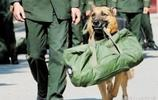 軍犬咬住軍人死活不鬆口,因為一鬆開,就再也可能見不到了