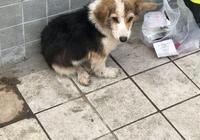 公園門口發現只流浪狗,被拋棄後它痴痴地望著主人離開的方向發呆
