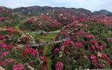 這是我見過最大最漂亮的天然花園