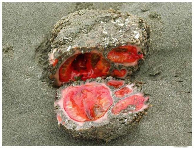 """國外遊客在海灘發現""""奇怪石頭"""" 專家鑑定稱其是不可多得的寶貝"""