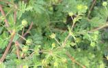 大家看看農村有多少好東西,田野裡的野菜野草都是寶貝!