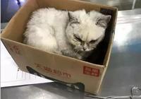 妹子在地庫裡撿到一隻病情嚴重的英短,誓要治好貓咪讓主人後悔