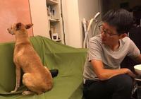 這個狗狗背對著主人鬧脾氣,原因讓人無奈又好笑,太有意思了!