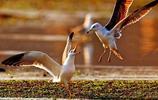 世界十大猛禽實力排行:角雕第三,金雕才排第二,第一當之無愧