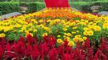 喜迎國慶、中秋佳節 五十萬盆花草扮靚湖北宜昌帶來美的享受