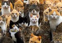 主人控訴每天被貓的眼神給鄙視!網友開始不相信,看完照片後笑噴