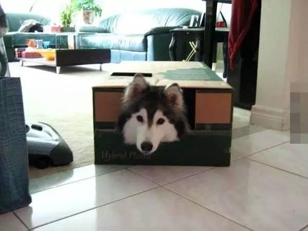 狗臉丟盡!被貓咪養大的狗不像狗!