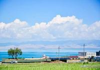 七月的青海一年中最美的時候湛藍的湖水金黃的油菜花海成群的牛羊