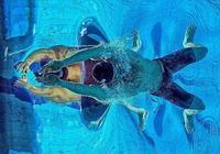 蛙泳和蝶泳:使用你的頭部