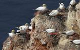 動物圖集:自由飛翔在天空的小鳥