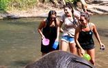 美女給大象洗澡 結果被大象調戲玩壞了